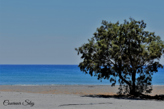A Tree In The Beach..